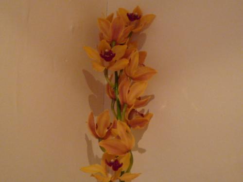 orchids%20001.jpg