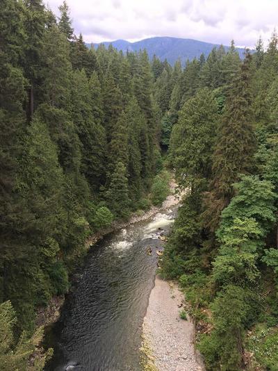 眺め木と川.jpgのサムネイル画像
