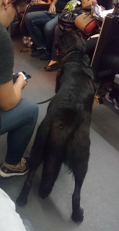 車内の犬.JPG