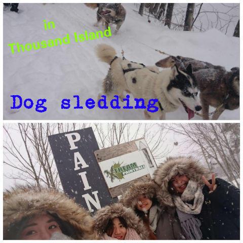 Dog sledding.jpg