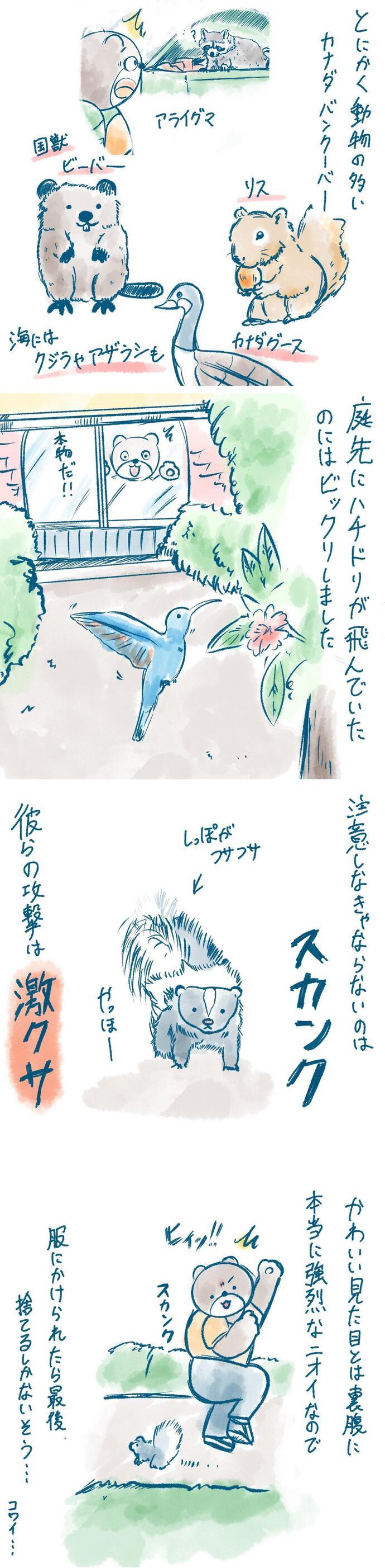ryugakuma_08_1280.jpg