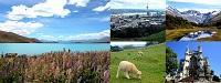 NZ_200.jpg