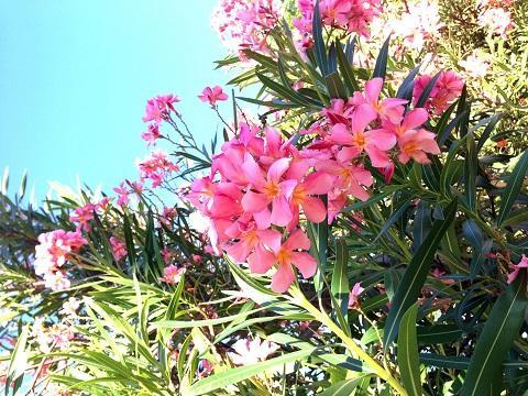 flower_summer.jpg