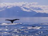whale_watching.jpg